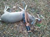 Congrats to William Stewart who got this nice buck!!!!